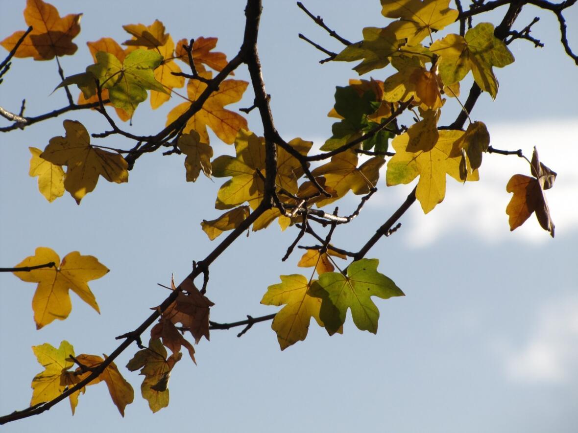 GI KW 45 Lernen im Herbst