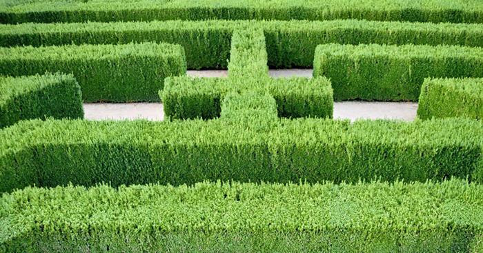 Labyrinth jpg