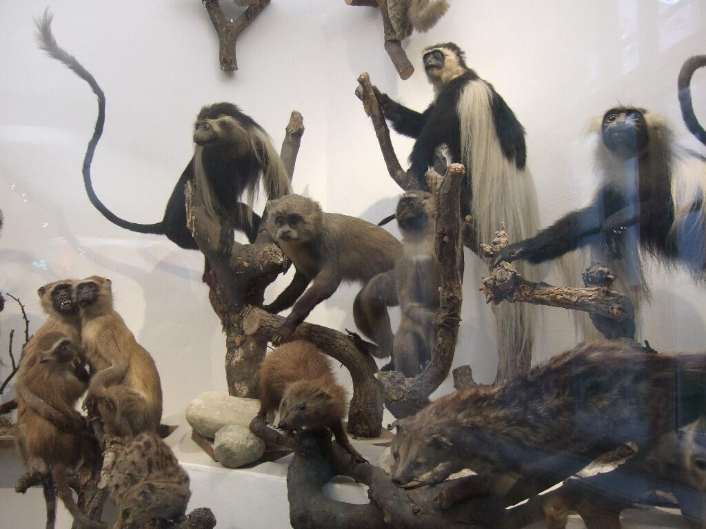 20Missionsmuseum4