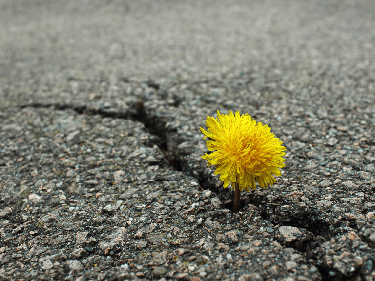 Blume Im Asphalt