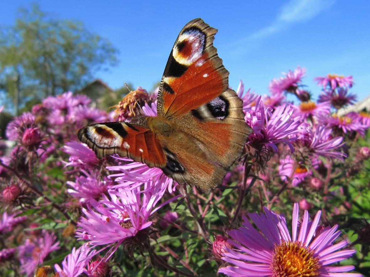 GI KW 29 Schmetterling