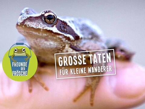 BU: Frosch & Co. hoffen auf viele Helfer (Foto: BUND Naturschutz)