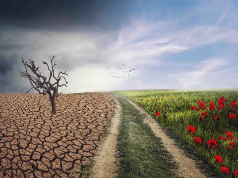 Mit diesem Motiv wird in Marktoberdorf für den Klimastammtisch geworben (Foto: pixabay)