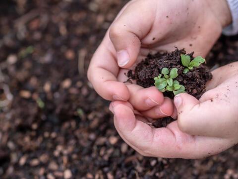 Klimawandel im Allgäu - Welche Möglichkeiten haben die Pfarreien?
