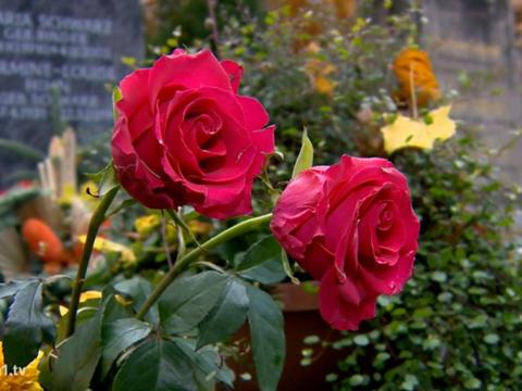 Bestattungen in Zeiten von Corona (katholisch1.tv)