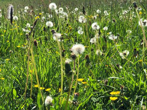 Frühlingswiese bei Friedberg (Foto: Julian Schmidt / pba)