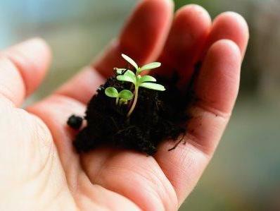 Ich halte dich in meiner Hand_plant-4036130_960_720_klein