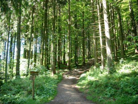 Waldweg_Kapf