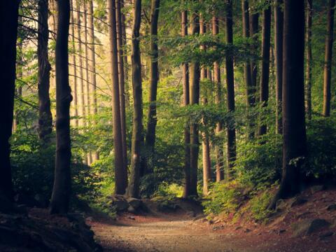 Das PEFC-Gütesiegel betrifft rund 2.100 Hektar an Wald in kirchlichem Besitz (Motivfoto: Unsplash)