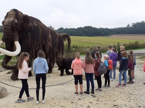 Begegnung mit einem Mammut