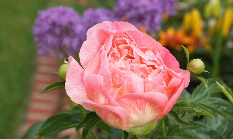 Oasentag für Frauen im Rosengarten