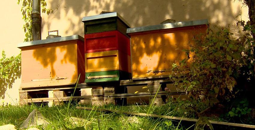 Boxbild Bienen Oberhausen
