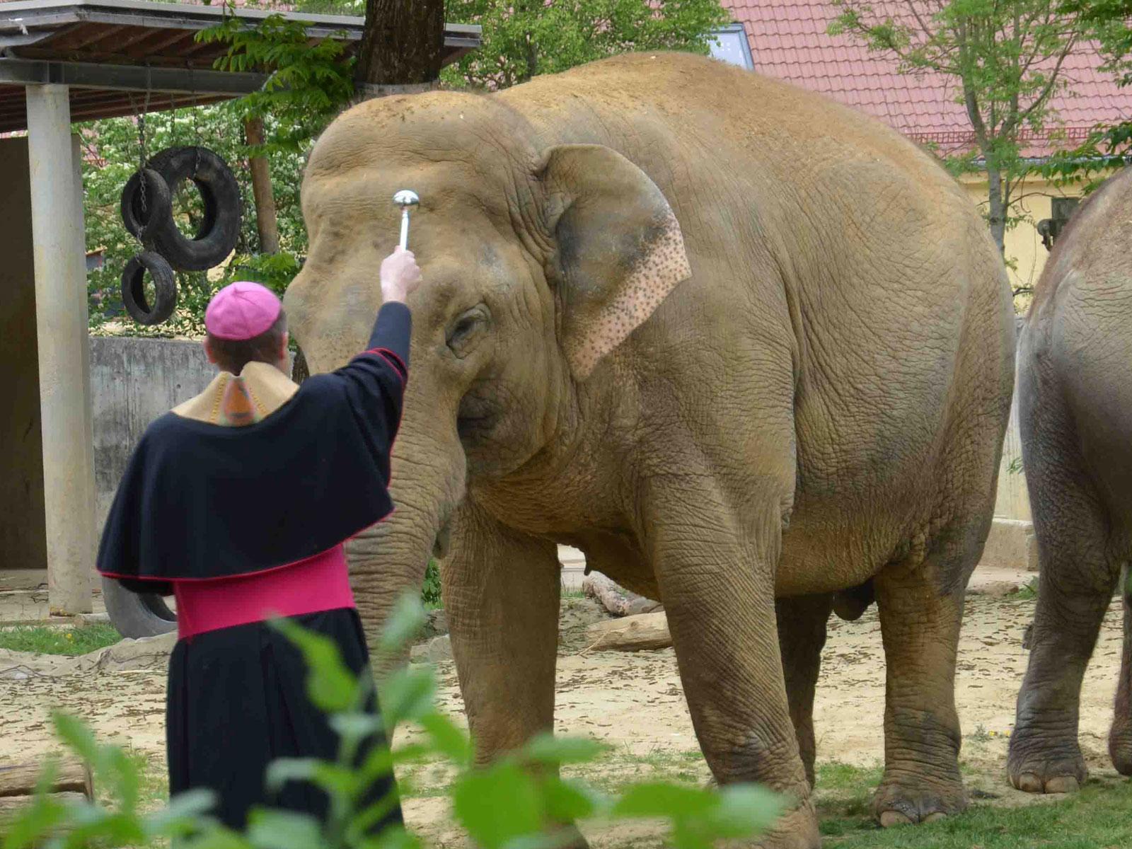 Weihbischof Florian Wörner segnet die asiatischen Elefanten im Augsburger Zoo (Symbolfoto: Alfred Herrmann / Bonifatiuswerk)